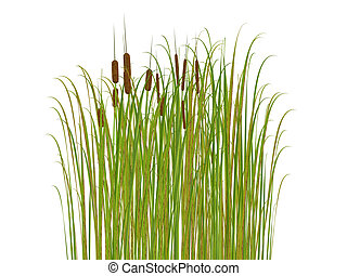 rush and grass isolated on white background