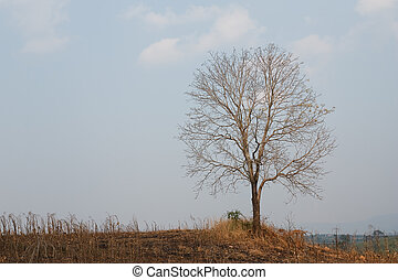Tree on the hill.