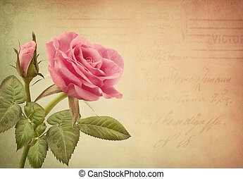Pink rose and old letter
