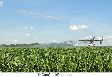 Watering Corn Crop - Farm irrigation equipment watering a...