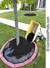 Dumping Mulch around the trees and shrubs, yard maintenance...