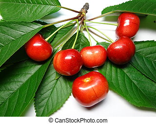 a cherry sprig - sprig of ripe cherry on a white background...