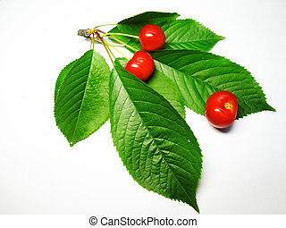 a cherry sprig is isolated on a white background