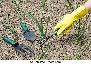 garden work - weeding