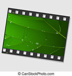 Film frame with green leaf and drops