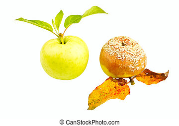 Two apples isolated on a white background