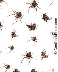Spiders - Big brown spiders on a whtie background