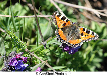 Orange Butterfly sucking the nectar from purple flowers...