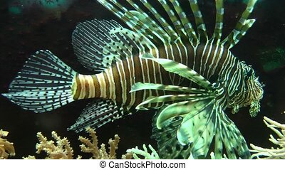 Beautiful tropical fish, underwater vegetation