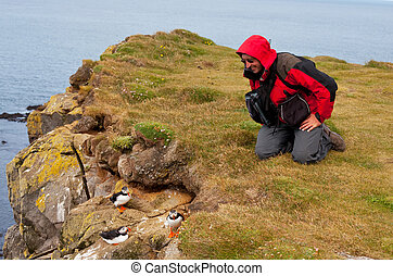 Puffin and tourist - tourist watch for puffin
