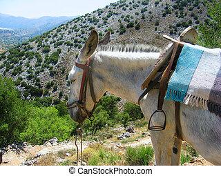 Greece, Crete, mule in mountain