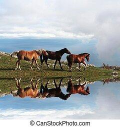 caballos, Montaña