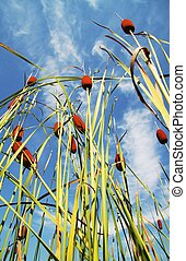 Cane - bulrush on blue background