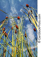 Bulrush_2 - cattails growing by the lake