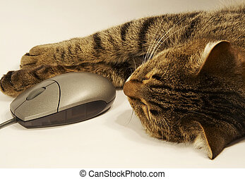 Cat and mouse - Sliping cat and mouse