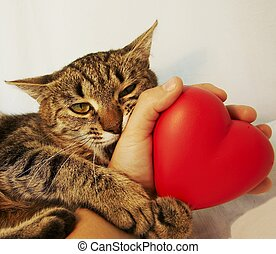 Cat and heart - Brown cat and red heart