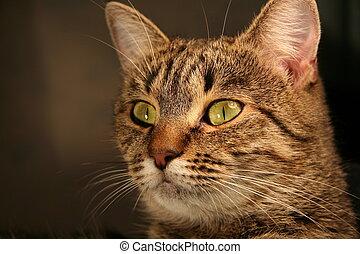 Cat_1 - cats portrait