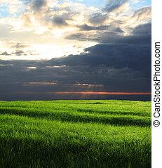 Field - Spring field