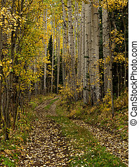 Aspen Trail - Small trail leading into an aspen forest near...