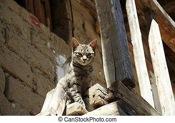 Cat - cats portrait