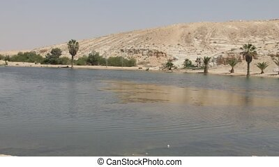 Oasis - Artificially created an oasis in the Negev Desert ,...