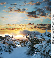 Winter forest on sunrise - Winter forest in mountains