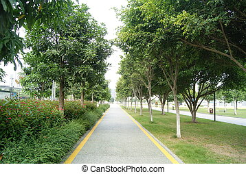 Tree-lined road , the green landscape, very beautiful.