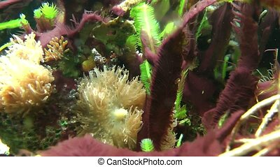 Underwater vegetation shallow dof