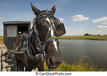 Horse and buggy - An Amish horse and buggy traveling a...