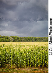 Storm Clouds over Corn Fields