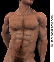 chest - a male model of human fitness