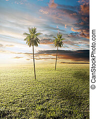 Idyllic landscape - Sunrise over the meadow, with palm trees