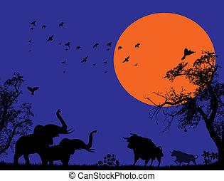 Elephants and bulls at blue sunset