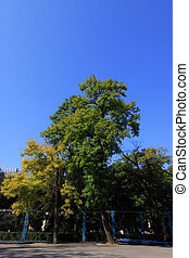 trees under the blue sky in a college campus