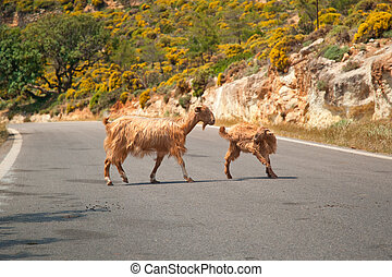 Cretan goats on the road