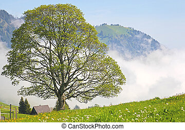 Lonely tree in the clouds in the Swiss Als. Switzerland,...