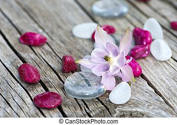Aquilegia flower with stones