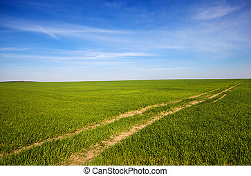 wheaten, campo