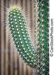 cactus spiky succulent green plants with spines