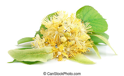 Linden flowers on white background