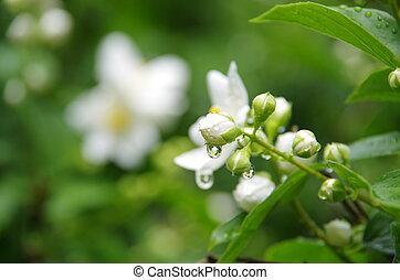 Blumenreflexion in einem Tropfen - In einem Wassertropfen...