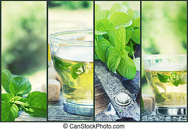 Mint tea collage. Freshly cut mint from the herb garden with...