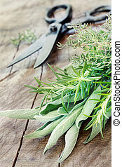 Freshly harvested herbs with old antique scissors on wood...