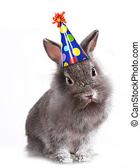 Angry Furry Grey Rabbit With a Birthday Hat On - Furry Grey...