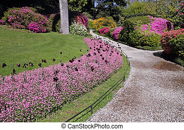 alley in historic garden of Villa Carlotta on lake Como,...