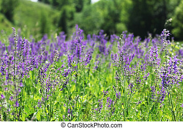 beautiful wild flowers - field of beautiful wild flowers of...