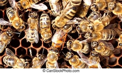 Queen bee is always surrounded by the workers - their...