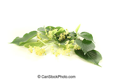 linden blossoms - fresh yellow linden blossoms with leaves...