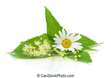 chamomile, nettle leaves and lime flowers on a white...