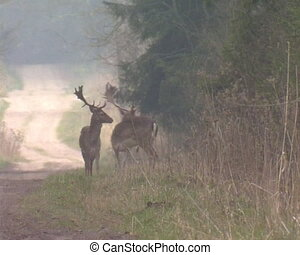 deer run into forest